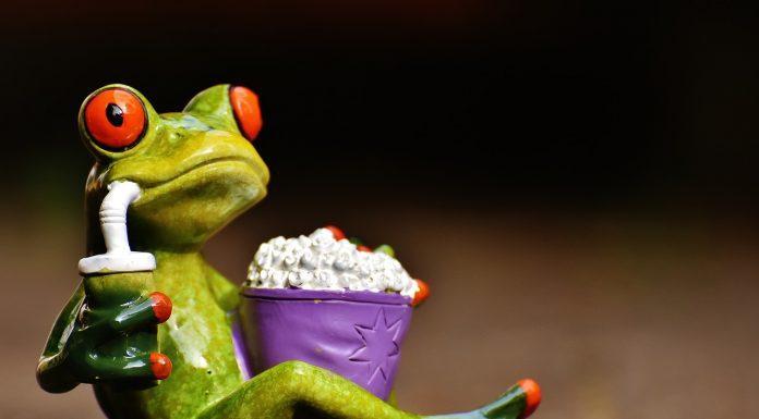 Frog eating popcorn