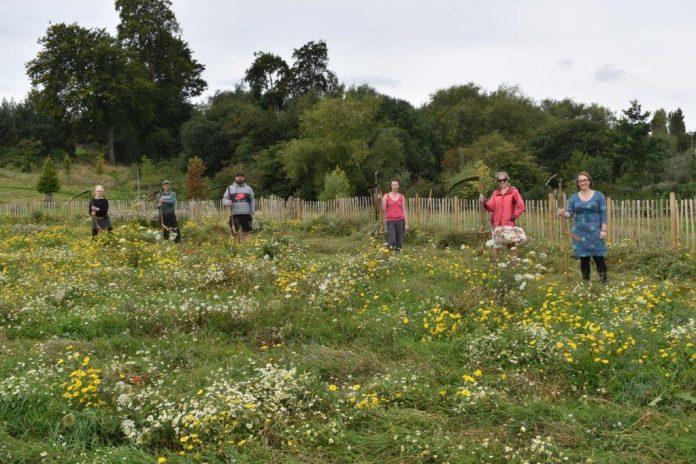 Queensway Meadow