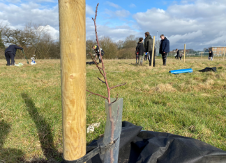 Students planting the heritage fruit trees on the field adjacent to Ysgol Clywedog.